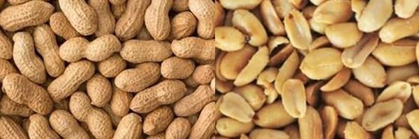 eating peanuts