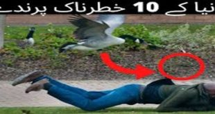 10 Most Dangerous Birds