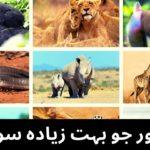 32 Animals That Sleep Too Much