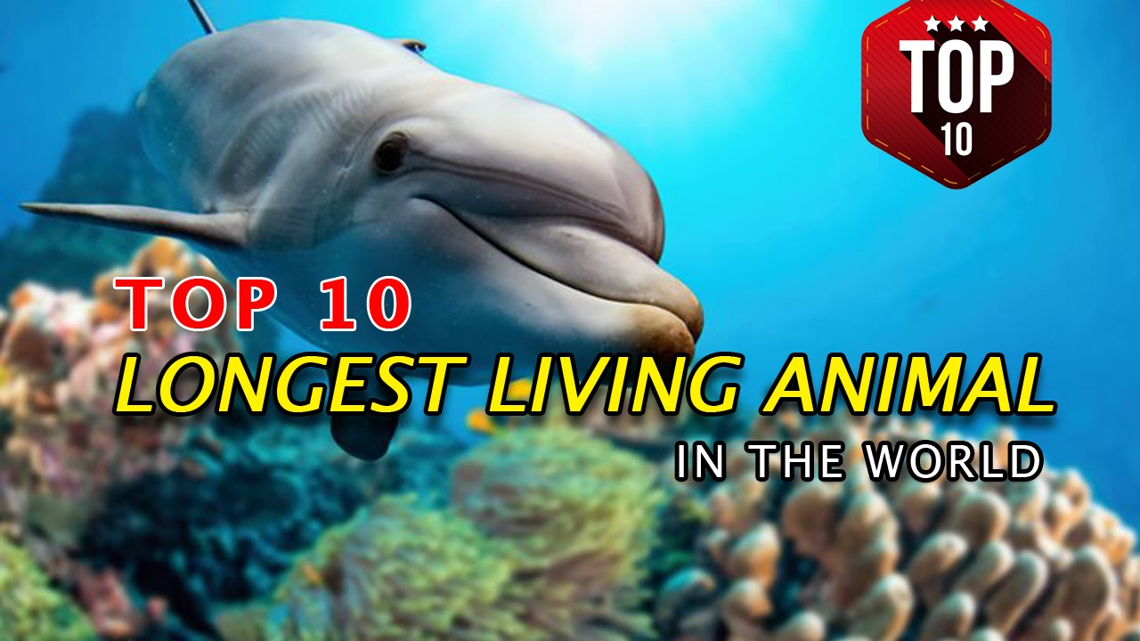 World Longest Living Animal Species