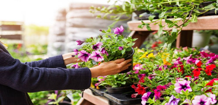 Mistakes You Will Never Make Again While Buying Flowers.